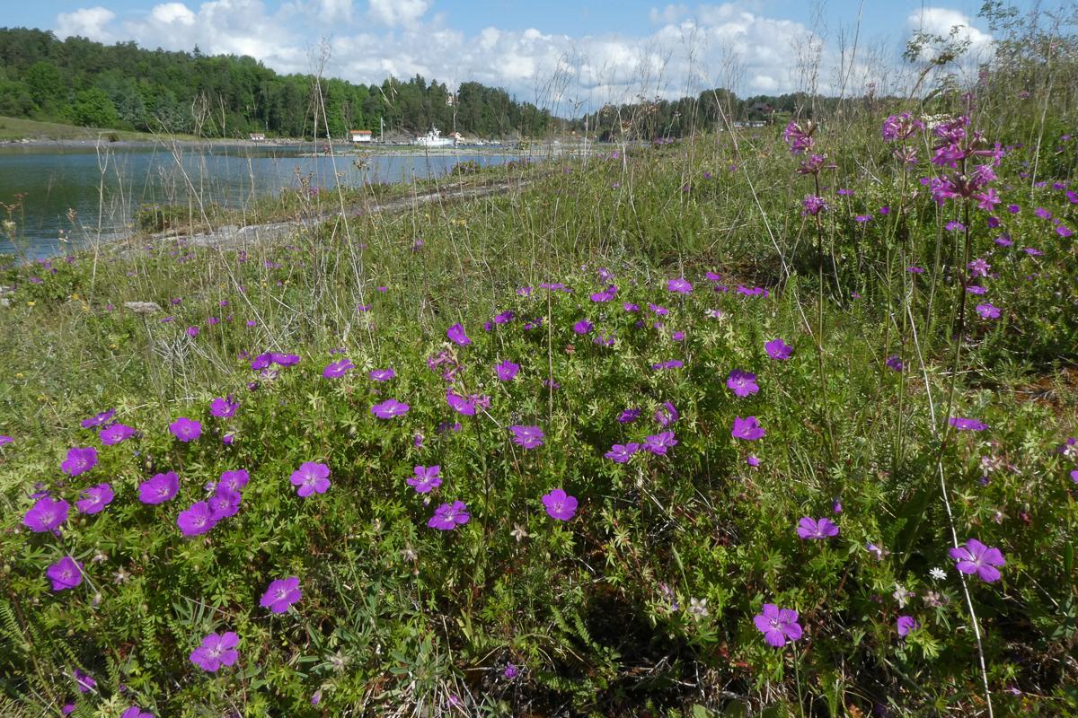 Åpen grunnlendt kalkmark er en artsrik naturtype. Foto: Siri Lie Olsen.