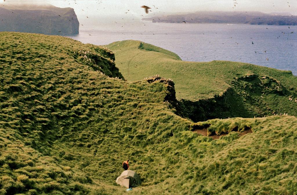 130 år med fangstdata av lunder på Vestmannøyene på Island viser at global oppvarming medvirker til bestandsnedgangen av verdens største lundekoloni. Foto: Arnþór Garðarsson